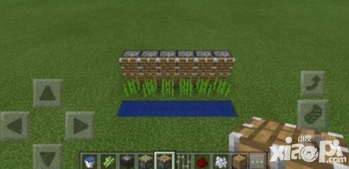 我的世界观察者自动甘蔗收割机制作攻略