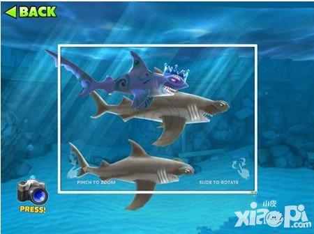 饥饿的鲨鱼进化微风宝宝详解