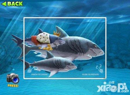 饥饿的鲨鱼进化鲨鱼宝宝王详解