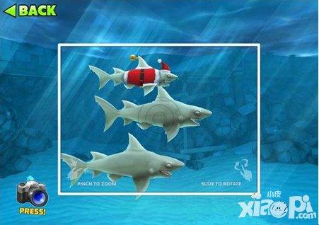 饥饿的鲨鱼进化圣诞礁鲨宝宝详解