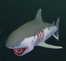 创造与魔法幼鲭鲨怎么样 创造与魔法幼鲭鲨属性