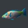 明日之后鹦嘴鱼获得方式 鹦嘴鱼怎么获得