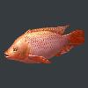 明日之后红罗非鱼位置 红罗非鱼在哪钓