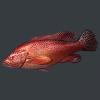 明日之后红石斑鱼位置 红石斑鱼在哪钓