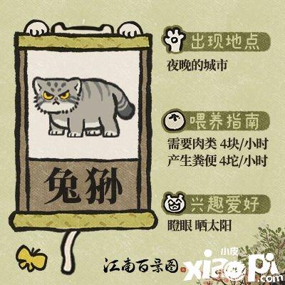 """【江南百景图】萌物图鉴 猫科动物中的""""表情包"""" —— 兔狲"""